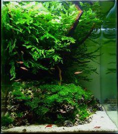 Aquascape Aquarium Design Ideas 45