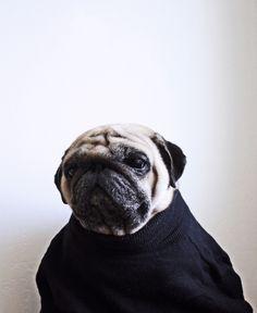 Douglas in High Knit Sweater.