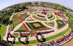 Dubai Miracle Garden, the world's largest flower garden opened its gates on February 2013 with over 45 million flowers. The garden is situated in China Garden, Garden Art, Box Garden, Garden Birds, Beautiful Flowers Garden, Big Flowers, Amazing Gardens, Beautiful Gardens, Dubai Tourist Spots