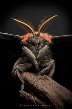 21 Beetles and Insects Photo Gallery - meowlogy Cool Insects, Bugs And Insects, Beautiful Creatures, Animals Beautiful, Mantis Religiosa, Insect Photos, Micro Photography, Insect Photography, Cool Bugs