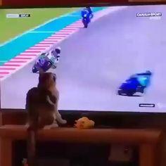 Super Funny Videos, Funny Short Videos, Stupid Funny Memes, Funny Dogs, Cute Baby Animals, Funny Animals, Ninja 300, Mr Cat, Cute Animal Videos