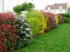 How to build a massive maintenance-free Gardening For Dummies, Planting Flowers, Garden Deco, Plants, Garden, Different Types Of Fences, Garden Borders, Garden Paving, Small Trees