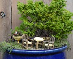 Fairy gardens: Less is more. One idea at a time, one idea per pot. The tree is Nana Hinoki Cypress.