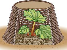 Rhubarb advance More - Diy Garden Projects Garden Types, Diy Garden Projects, Diy Garden Decor, Garden Ideas, Organic Gardening, Gardening Tips, Urban Gardening, Vegetable Gardening, Potager Palettes