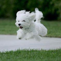 Cute!!!! I wanna puppy like this Not fair