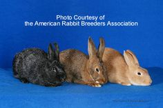 Silver rabbits smaller than Silver Fox, also raise for their fur. Meat Rabbits, Raising Rabbits, Silver Fox Rabbit, New Zealand Rabbits, Rabbit Breeds, Some Bunny Loves You, Rodents, Livestock, Better Suited