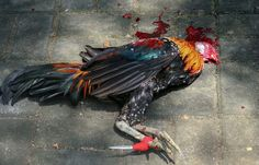 Local Police, Animal Welfare, Animal Rights, Death, Philippines, Cebu City, Sign, Rebel, Babys