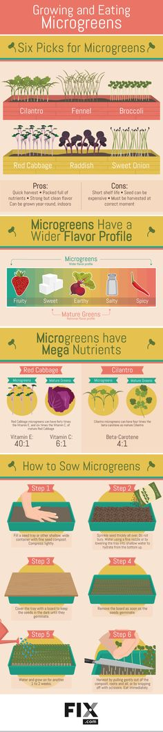 Growing and Eating Microgreens #infographic #Food #Gardening