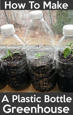 How to Make a Bottle Greenhouse. Recycle and use transparent plastic bottles as greenhouse for seeds starting. Learn how to start seeds with plastic water bottles or any transparent bottle and Save money. #minigreenhouse #greenhouse #seeds #seedstarting # Plastic Bottle Greenhouse, Reuse Plastic Bottles, Recycled Bottles, Recycled Art, Miniature Greenhouse, Greenhouse Plans, Greenhouse Wedding, Diy Mini Greenhouse, Greenhouse Gardening