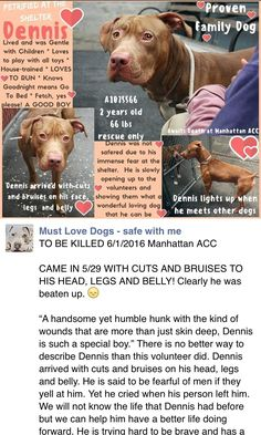 MURDERED 6/1/16 Manhattan Center My name is DENNIS. My Animal ID # is A1075566. I am a male red and white am pit bull ter mix. The shelter thinks I am about 2 YEARS I came in the shelter as a OWNER SUR on 05/29/2016 from NY 10039, owner surrender reason stated was PERS PROB. http://nycdogs.urgentpodr.org/2016/05/dennis-a1075566/