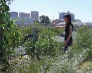 Your Home Technical manual - green roofs and walls Green Roofs, Green Walls, Manual, Textbook
