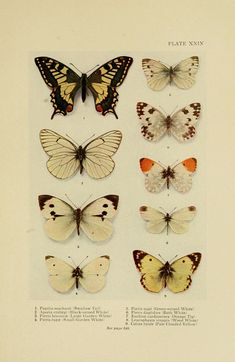 biodiversity library on flickr