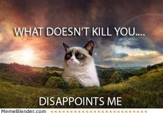 40+ Grumpy Cat Memes That You Will Love! #grumpycat #memes