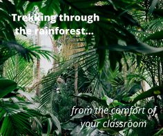 Rainforests are the Earth's oldest living ecosystems and can be a great topic to teach your students. But which books can you use to inspire your class? Gill Chambers, Senior Lecturer in Education shares her favourites.