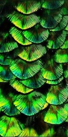 green peacock feathers #AllThingsYellow