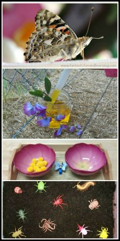 18 ideas for teaching children about bugs and insects