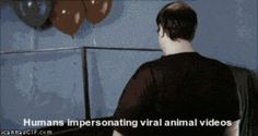 Humans impersonating viral animals videos