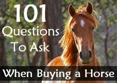 I always say to buy the best horse your money can buy. It costs as much to have a free horse as it does to have the best horse for your needs!   ---101 Questions to Ask When Buying a Horse | Savvy Horsewoman