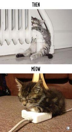 Macskák, akkor és most   Fotó: boredpanda.com