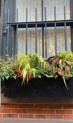 Beacon Hill, Herbs, Plants, Herb, Plant, Planets, Medicinal Plants