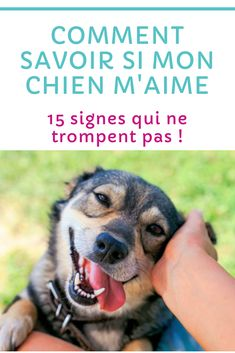 100 petites bandes élastiques Snag Free Hair Chien Animaux Toilettage Tie Back to School Girls