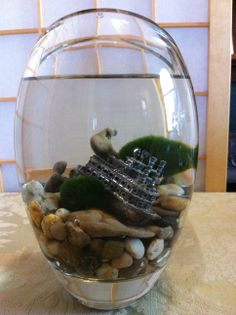Marimo and Shipwreck by Biophilia, Guelph, Ontario $45 Marimo, Shipwreck, Recycled Glass, Ontario