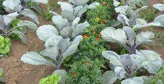 Garden Cottage, Garden Landscaping, Landscape, Vegetables, Gardening, Food, Lawn And Garden, Front Yard Landscaping, Scenery