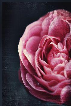 Vintage Flower 8x12 - Fine Art Photography