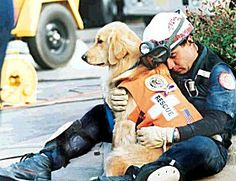 Dog+Search+and+Reasce+Vest | search and rescue dog