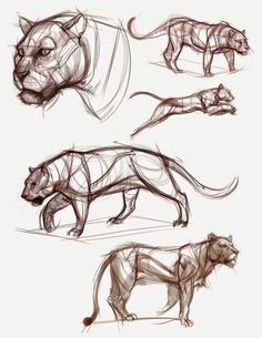 Cat anatomy in 2019 animal sketches, drawings, animal drawings. Animal Sketches, Art Drawings Sketches, Cartoon Drawings, Animal Drawings, Drawing Poses, Cat Drawing, Figure Drawing, Drawing Ideas, Cat Anatomy