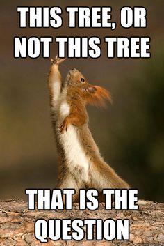 ... stuff humor items shakespeare hairstyles shakespeare squirrels animal  Animal Shakespeare Memes