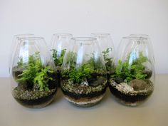 Had fun planting these tear drop terrariums today for event leasing. We think they'd look great for a wedding! Don't you?