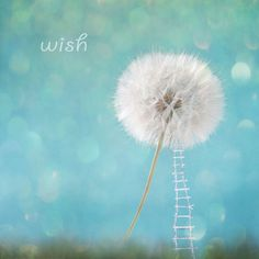 Dandelion Wish Harvest Giant Fairytale Fine Art by Bunderful. $28.00, via Etsy.