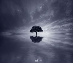 Lonely Tree by Uzair Aziz on 500px