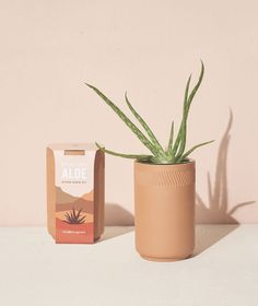 """The cutting edge of houseplant cultivation. This terracotta kit has a glazed interior and is outfitted with a passive hydroponic system known as """"wicking,"""" which brings water and nutrients up to the plant's roots. So whether you forget to water, overwater, or both, this planter's got you covered. Comes equipped with everything you'll need to start growing, just add water and set in a sunny window. Detail: 5.3""""H x 3.5""""D Non-GMO seeds Stainless steel net pot Coco pith disk Instru Cactus Seeds, Bonsai Seeds, Grow Kit, Hydroponics System, Sustainable Gifts, Self Watering, Gift Store, Indoor Garden, Terracotta"""