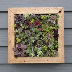 Succulent Wall Art succulent living wall art, vertical picture kit, buy this or we