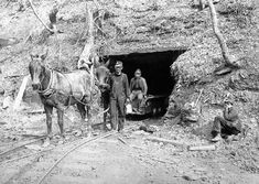 Mules pull coal from a deep mine at Cannel City in Morgan County. About 80-85 years ago, Cannel City was world famous for its cannel coal, hence the name of the town. A large mining camp grew up around the mines and was served by the Ohio & Kentucky Railroad. The miners in this photo are unidentified.