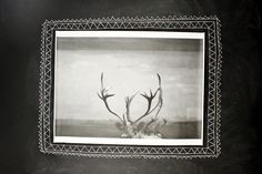 I love this beautiful antlers poster.  I'm thinking of putting it in my woodland themed, rustic bedroom.  mooreaseal.com