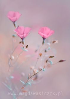 Dreaming in blush... by Magda Wasiczek on 500px