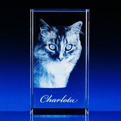 3D cat in glasscube