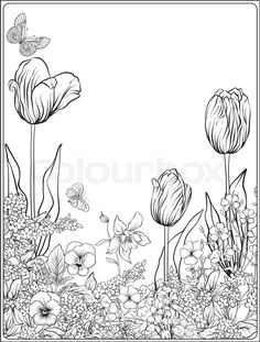 Stock vector of 'Composition with spring flowers: tulips, daffodils, violets, forget-me-nots in botanical style. Stock line vector illustration. Outline hand drawing coloring page for adult coloring book.    '