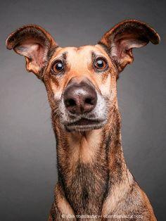 Köpek Portreleri: Bir Fotoğrafçı Köpeklerin Kişiliklerini Göstermek İsterse