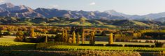 WOW: Wines from Cheviot Hills North Canterbury, New Zealand | Mt. Beautiful
