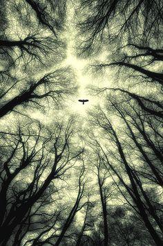 morethanphotography: A bird by lassmath