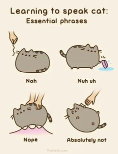 Learning To Speak Cat: Essential Phrases