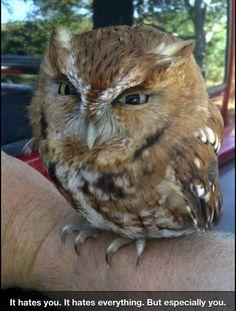 Grumpy, skeptical looking owl