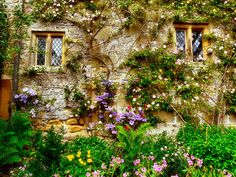 love this wall, the flowers and those awesome windows!