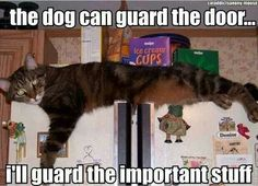 Pas op voor de kat!