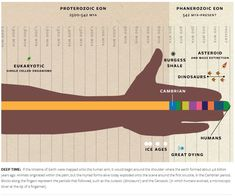 Infographic helps you to visualize geologic time. Earth came into being at the shoulder, single cell organisms started at the forearm, humans only rocked up at the tip of the finger nail. Science Resources, Science Lessons, Science Education, Life Science, Teaching Resources, Writing Activities, High School Biology, Middle School Science, Deep Time