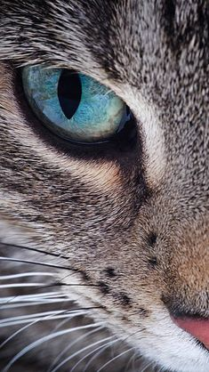 Samsung Galaxy Cat Face Wallpaper Source by videos wallpaper cat cat memes cat videos cat memes cat quotes cats cats pictures cats videos Pretty Cats, Beautiful Cats, Animals Beautiful, Beautiful Pictures, Funny Animals, Cute Animals, Funny Cats, Photo Chat, Animal Wallpaper